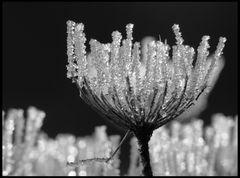 Kristalllüster Black & White