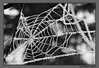 Kristallnetz