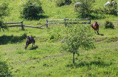 Kroatien - Pferde auf der Ranch 08