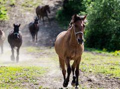Kroatien - Pferde auf der Ranch 09