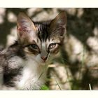 Kroatisches Katzenkind...