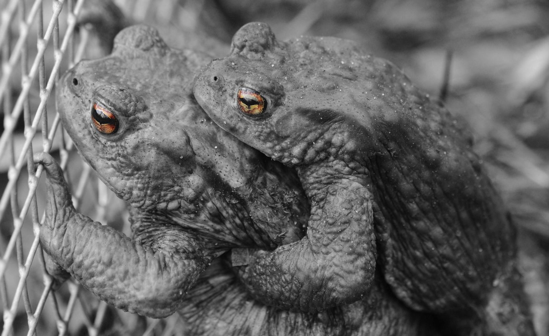 Kröten