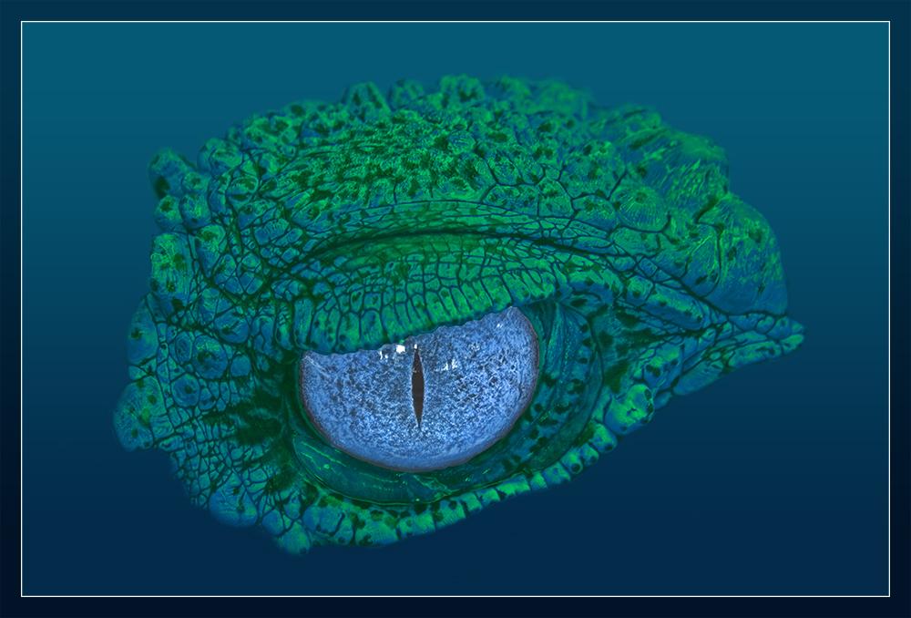 Kroko Eye