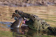 "Krokodil I ""kein Spass"""