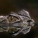 Krokodil - Zoo Rostock