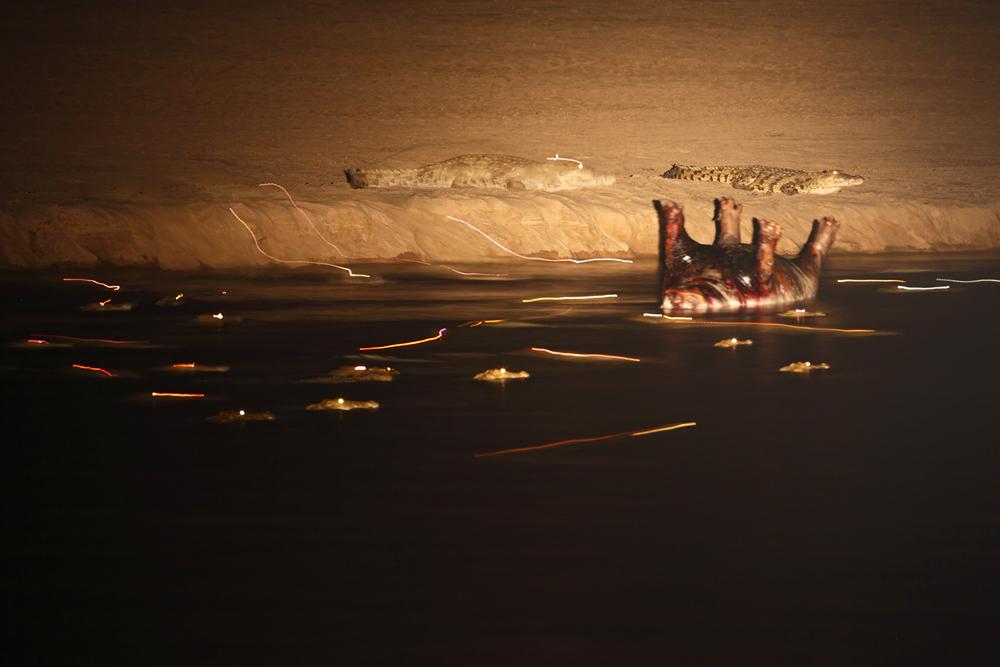 Krokodile -