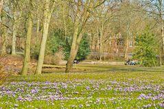 Krokusblüte im Schlossgaten Husum #2