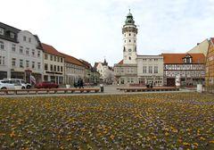 Krokuswiese auf dem Rathausturmplatz in Salzwedel