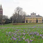 Krokuswiese vor dem Wörlitzer Schloss