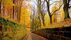 Kronacher Festungswald:Farbenpracht,bei Regen