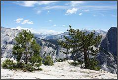 Krüppelkiefern oberhalb des North Dome/Yosemite N.P.