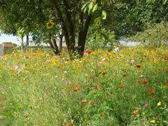 KS Botanischer Garten (2)
