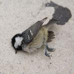 Kuckuuuuuuck... watt hattdenn datt kleine Vögelschen?!?