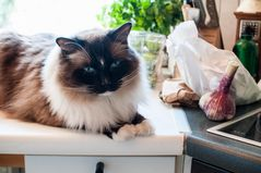 Küchen-Stilleben mit Emil ;-)