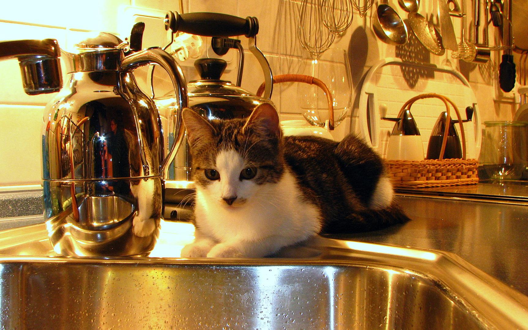 Küchenhelfer ( Cleo )