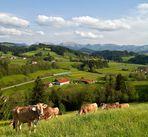 Kühe, Züge und Berge