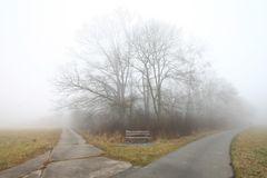 Kühkopf - Die Gabelung im Nebel