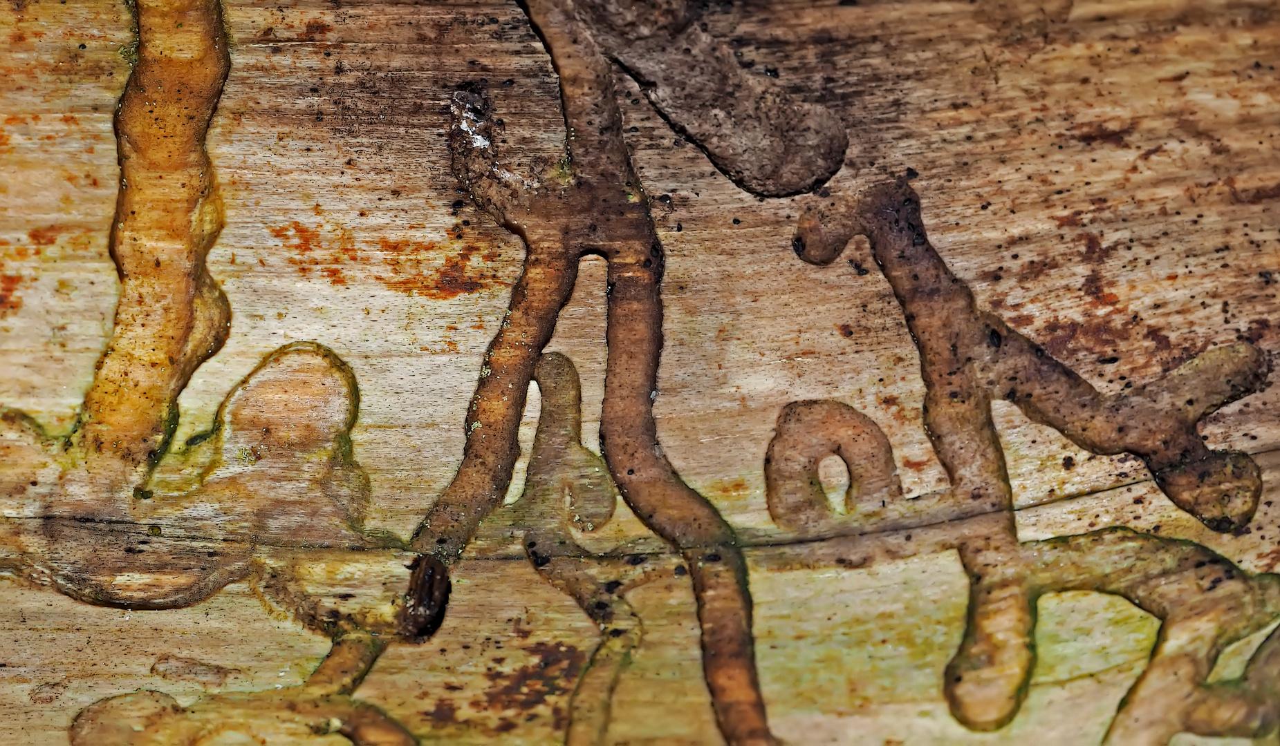 Künstler Borkenkäfer hat dieses Bild geschnitzt... - L'artiste, c'est un Ips typographus du bois!