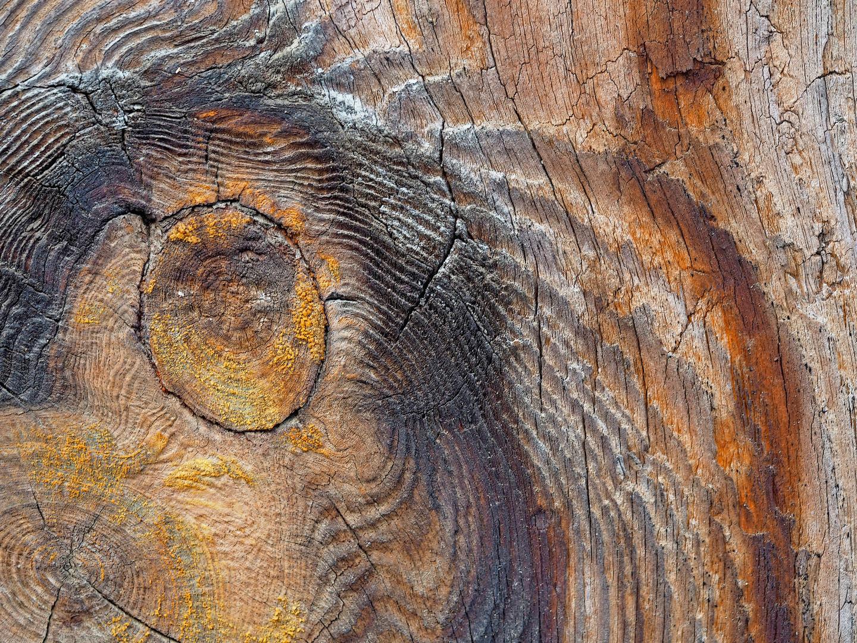 Künstlerin Natur hat für uns ein Stück Holz geschmückt... - L'art de mère Nature...