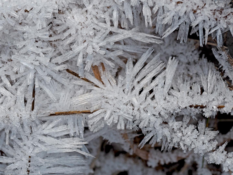 Künstlerin Natur hat immer etwas zum Staunen bereit! - Fleurs de glace...