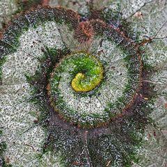 Künstlerin Natur hat wieder ein fantastisches Bild gemalt!