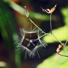 Künstlerin Natur liebt geometrische Formen!
