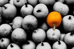 Kürbiszeit - Herbstzeit