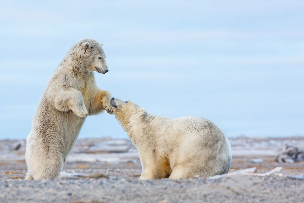 Küss' die Hand, Madame ...