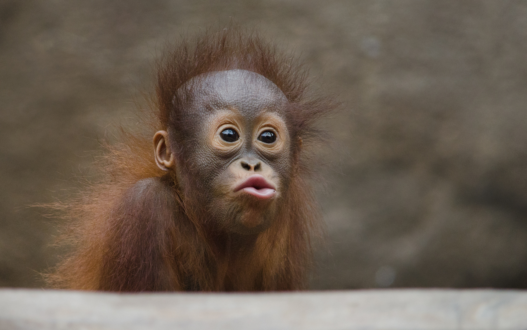 Kusschen Foto Bild Tiere Tierkinder Orang Utan Baby Bilder