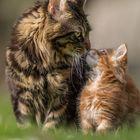 Küsschen... (: