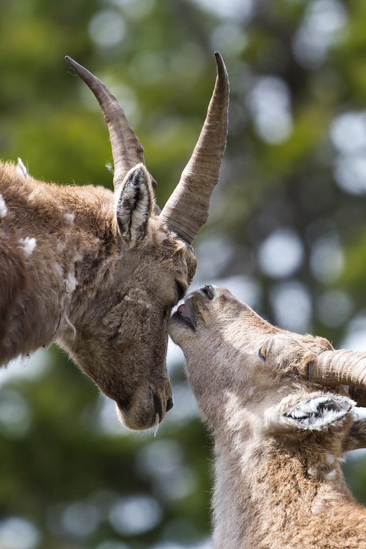 Küsschen Tiere