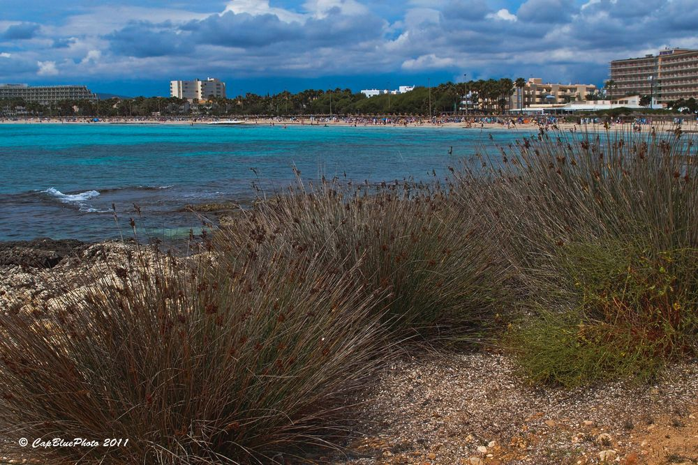 Küste bei Sa Coma (Nähe Calla Major)