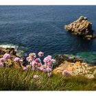Küstenblümchen...