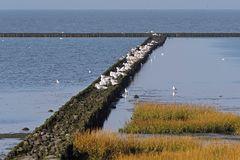 Küstenschutz durch Schlickabsetzung vor Spieka-Neufeld (südl. Cuxhaven)