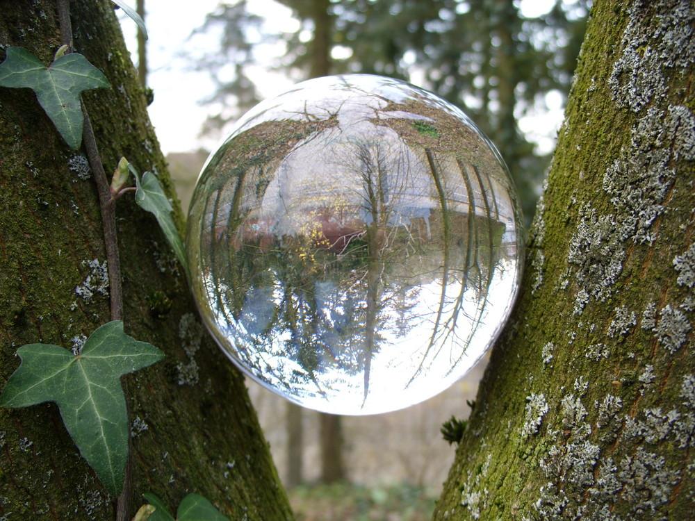Kugel am Baum