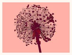 Kugelblume Abstrakt