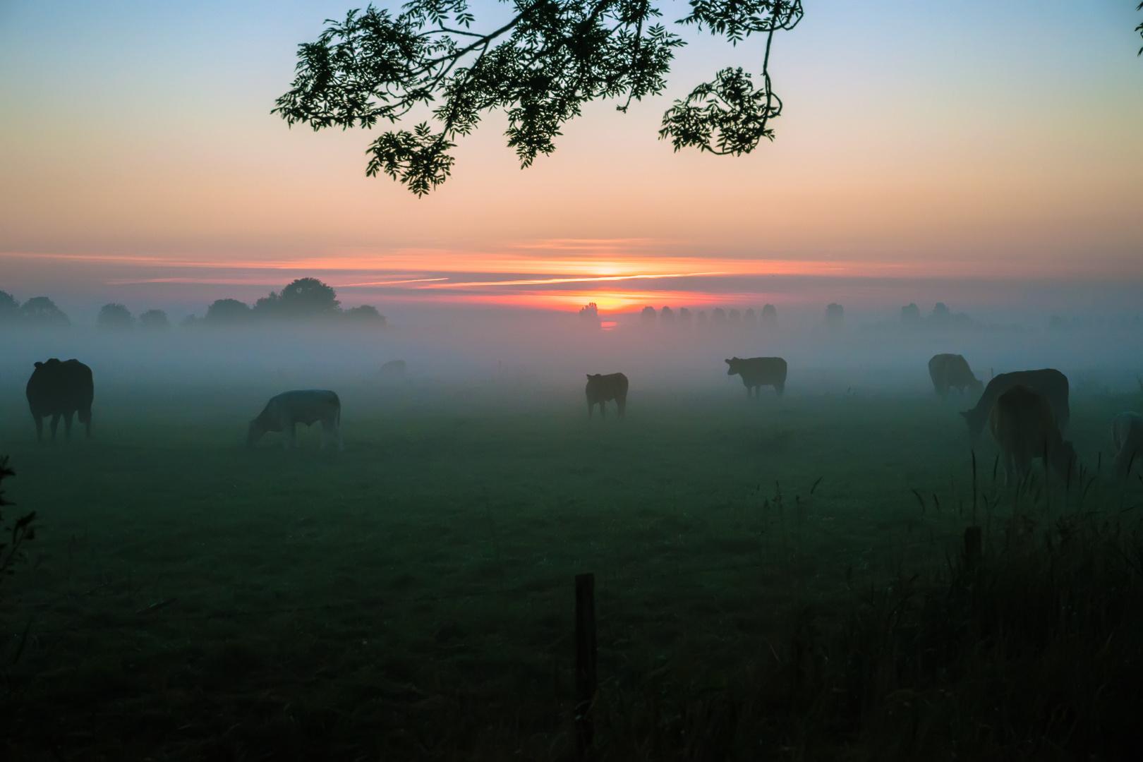 (Kuh)-Frühstück im Nebel