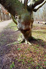 Kuh im Baum