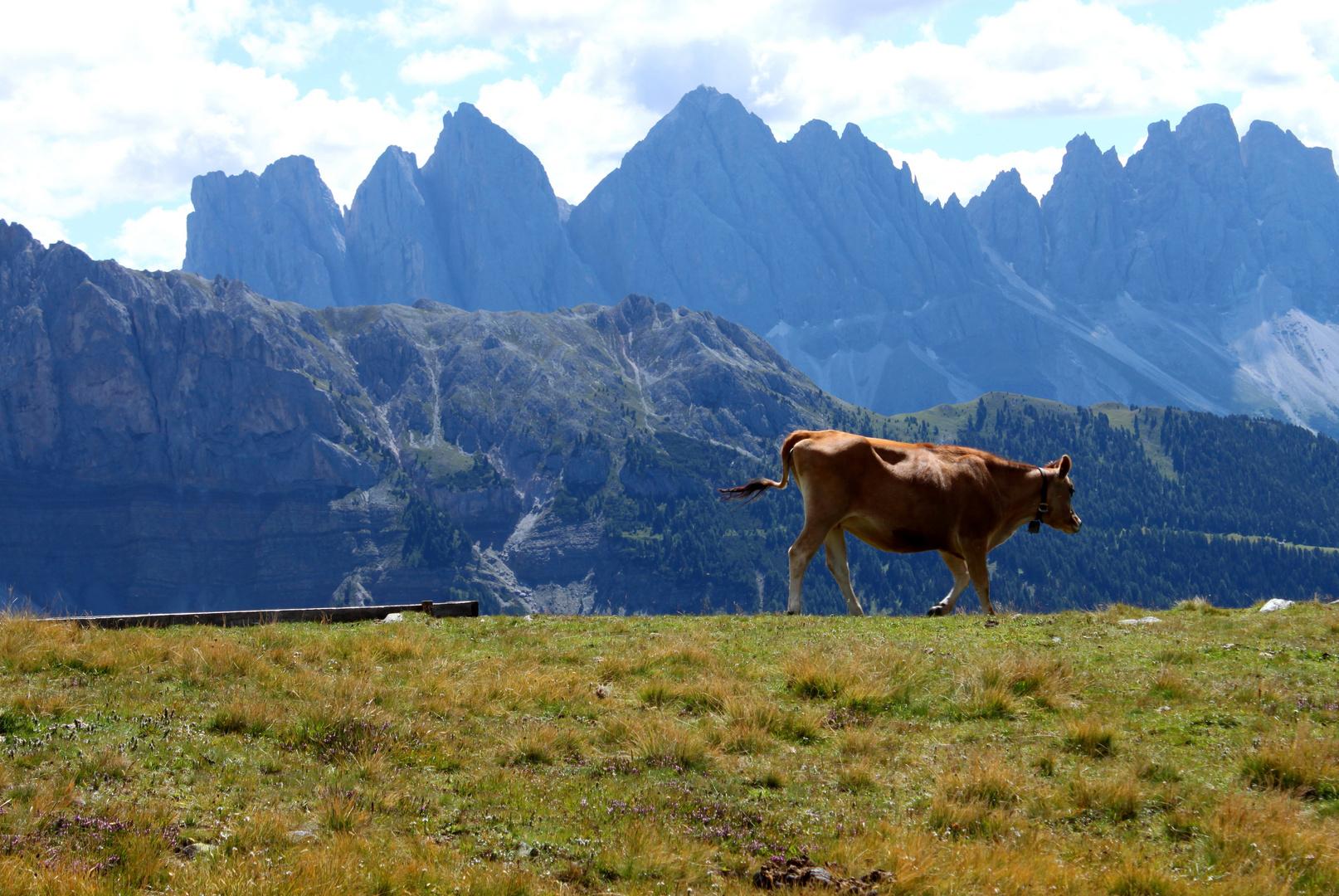 Kuh mit Berg oder doch berg mit Kuh ?