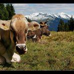 Kuh muss sein!