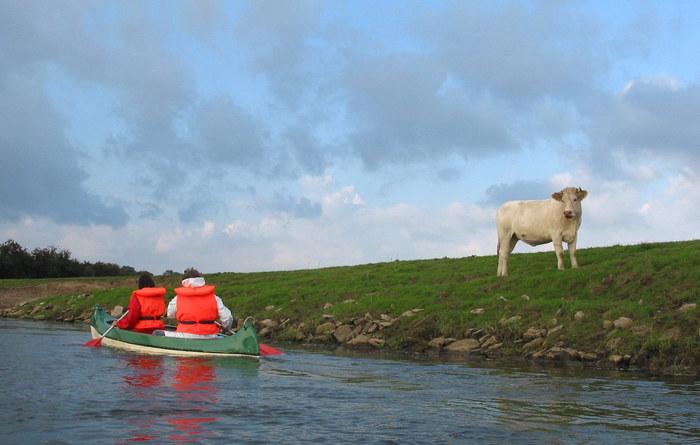 Kuh und Kanu