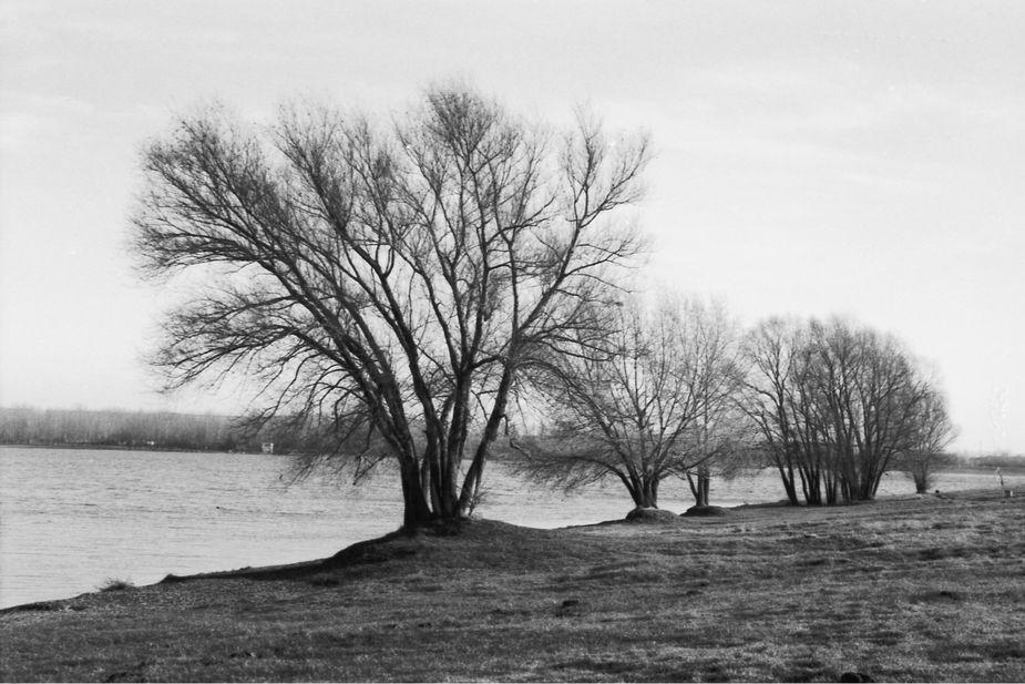 Kulkibäume