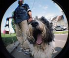 Kulturhund