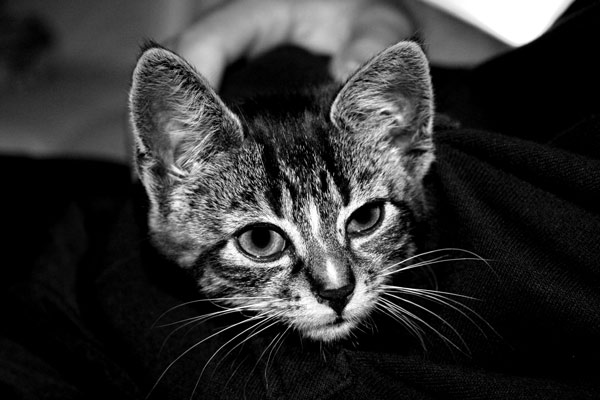 Kumpels Katze