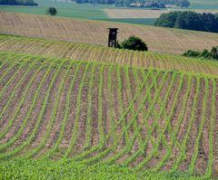 Kunst in der Landwirtschaft
