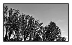 Kunstbäume