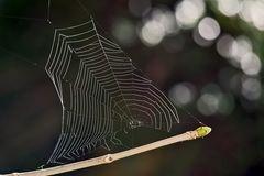 Kunstvolles, von der Sonne durchflutetes Spinnennetz! - L'artiste, c'est l'araignée!