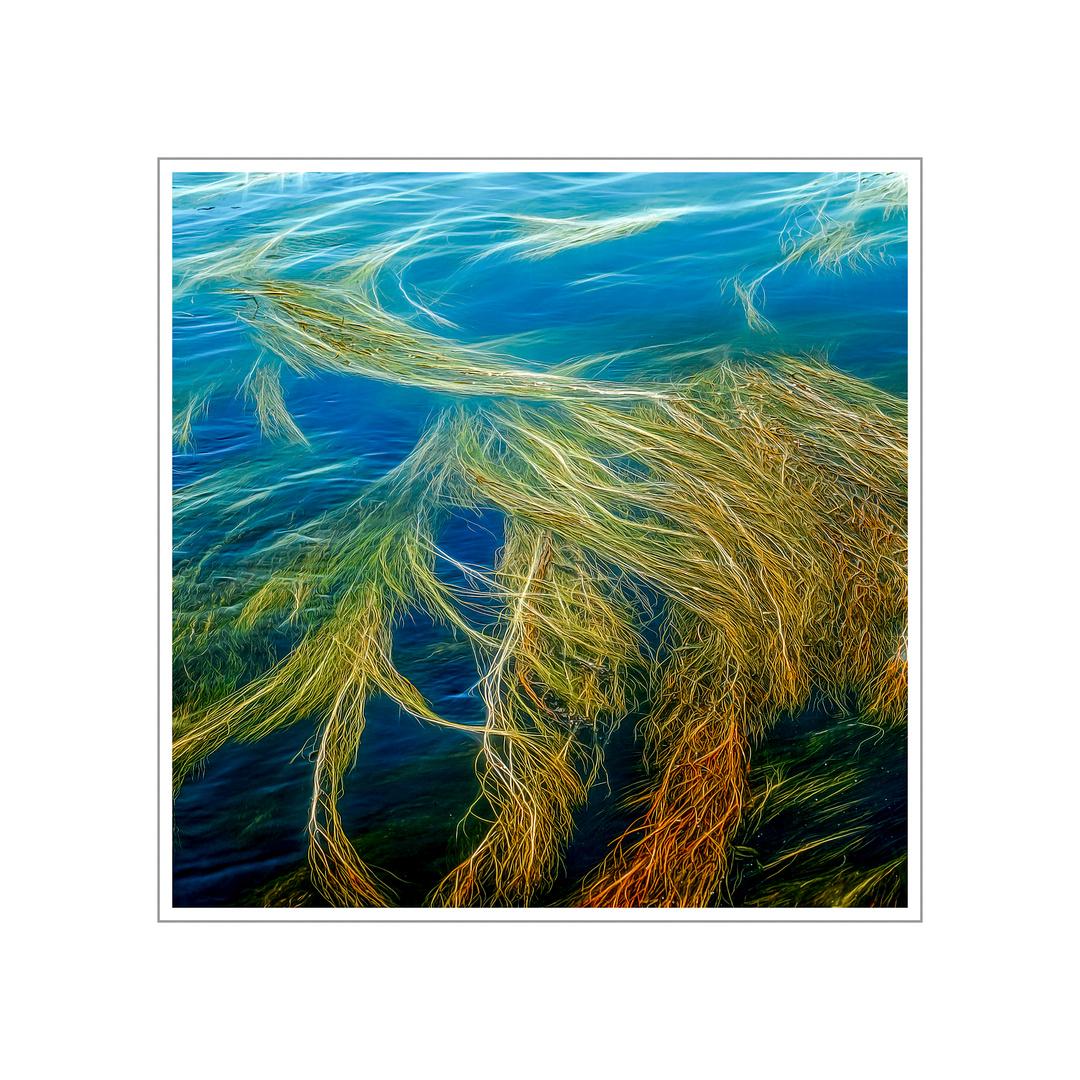 Kunstwerke der Natur - Flutender  Hahnenfuß