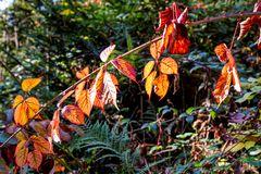 Kunterbunt   -   die Farben des Herbstes kündigen sich an.