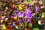 kunterbunter Herbstbeginn